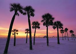 Clearwater Beach Dazzles With Impeccable Beaches And Inviting Waters Besides The There Is S Small Town Atmosphere